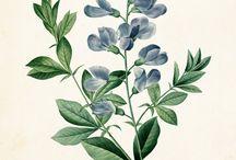 KIM CAVALLI PLANTS