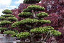 nivaki&bonsai