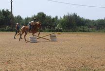 Felix / My horse riding haflinger