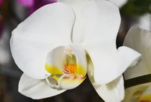 2015 Orchids in our Greenhouse / Exotic and beautiful additions to your home!