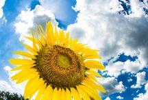 Subamos Al Cielo / Cielo, sol, nubes, aire, Sky, sun, cloud, air