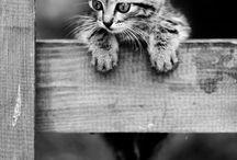 A-Кошки черно-белое / Черно-белые фотографии кошек