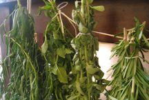 Herbs I like