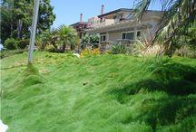 No Mow lawns