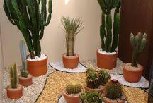 Kaktuszok- pozsgások