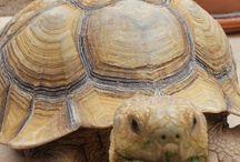 Tortoises!!!!