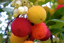 ovoce (fruit)