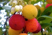 Frutas Européia