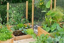 Garden: Herb & Vegetable