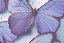 Butterfly/ бабочки