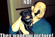 Funny puggy