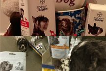 Christmas Gift Ideas for Dogs / by Fidose of Reality