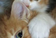 catlove.