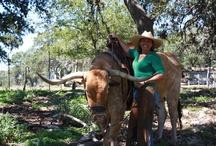 Longhorns / Longhorns are a Texas tradition!! I love longhorns!!