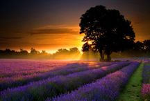 Sunrise/Sunset / by Deb Korbel