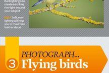 Photography captive birds