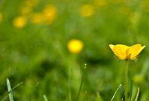 Foto - 3. Blommor