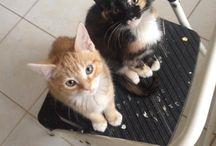 The Kittens! / My kittens