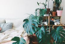 • Urban Gardening •