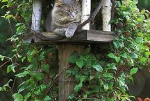 Caturday! / Where Siberian cats and kittens like to hang out on Caturday!