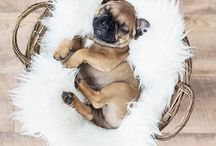 Dogs featured on our page / We feature the #cutest and most #adorable #dogs on our page. There's an element of #interesting and or #funny. Follow us for a #daily dose of cuteness !