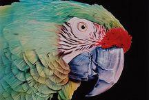 colour inspired / by Eleonora Simonti