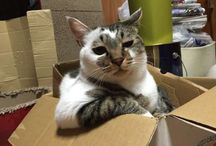 Cats & Boxes / inseparable.