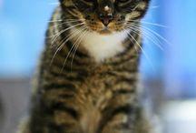 Twój Kot Piłby Whisky