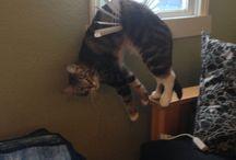 Cat Passion