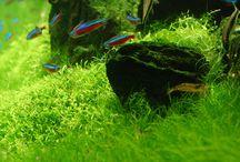 The zen of aquarium keeping / by Christine Blake