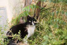 Gatos callejeros AMAN / Gatos esterilizados de colonias AMAN en Málaga