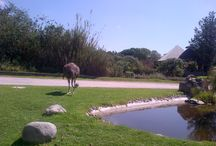 Africam / Fotos de mi visita a Africam Safari, Puebla