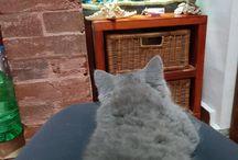 kira cat