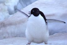 Around the World-Antarctica / animals that live there, / by VickiandJoey Froelich