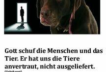 Tierschutz