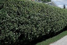Hedges / by Barb Zwarts