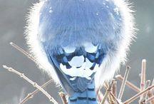 Great Bird Photos