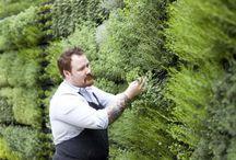 Ландшафт вертикальное озеленение