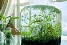 Terrarium aquatique