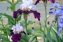 garden plants-propagation etc