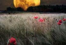 well, that's just beautiful / by Celia Ferguson