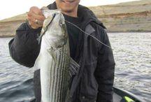 www.realfishbait.com Real Fish Baits