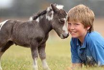 Mini / Pony