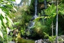 Tobago Glam / Take a virtual tour of Trinidad's sister isle. Sights, sounds and tastes :)