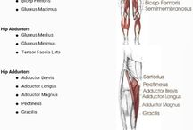 All About The Muscles / This board depicts various types of Muscles found in the human body