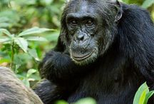 TRAVEL primates of east africa