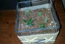succulents &cactuses