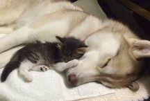 σκυλακι και γατακι