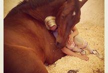 """""""Liebe"""" / Ein Tier liebt....."""