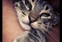 Katzen  / ❤